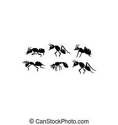 昆虫, セット, 蟻, 黒