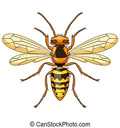 昆虫, マスコット, 白, スズメバチ, 漫画, 背景