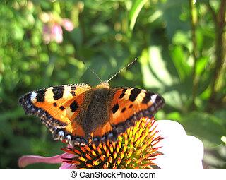 昆虫, 花