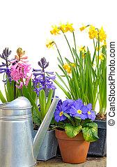 明るい春の花