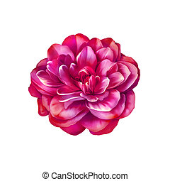 明るい, ツバキ, 花, ピンクは 上がった