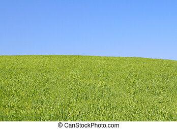 明亮, 草地