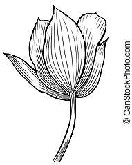 春の花, イメージ
