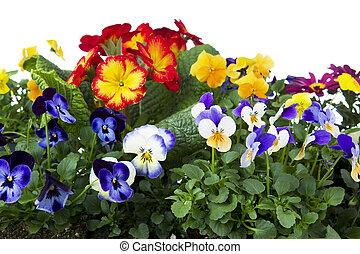 春の花, カラフルである