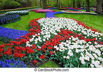 春の花, カラフルである, チューリップ
