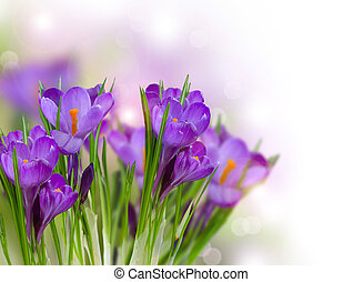 春の花, クロッカス