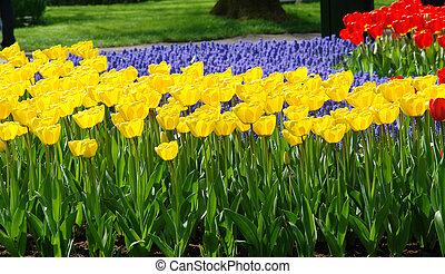 春の花, ベッド, 中に, keukenhof