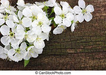 春の花, 上に, 木, 背景