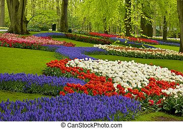 春の花, 中に, オランダ, 庭