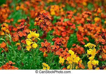 春の花, 公園
