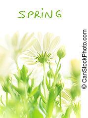 春の花, 新たに