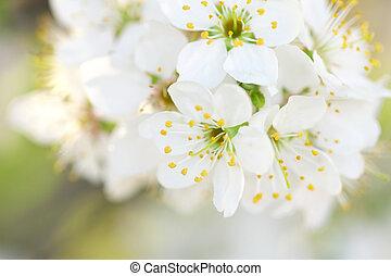 春の花, 木