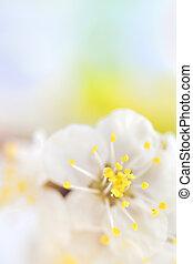 春の花, 木, マクロ