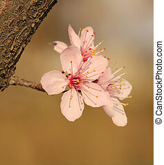 春の花, 木, 咲く