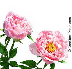 春の花, 美しい