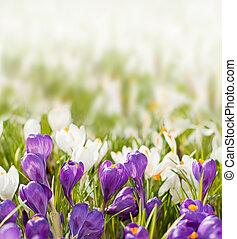 春の花, 背景, ぼんやりさせられた
