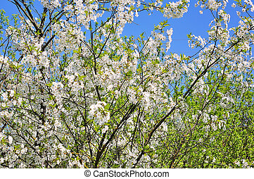 春の花, 背景