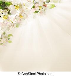 春の花, 背景, ライト