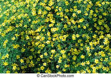 春の花, 自然, 背景, 黄色