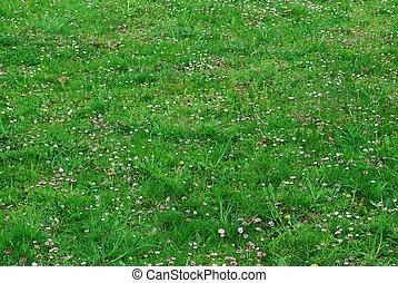 春の花, 草, 緑の背景