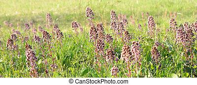 春の花, 草, 緑, バックグラウンド。