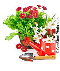 春の花, 道具, 庭