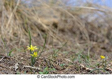 春の花, 黄色, ファイルされる