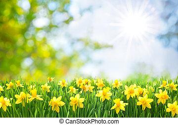 春天, 东方, 背景