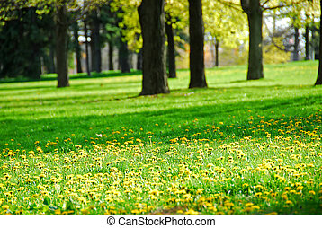 春天, 公园