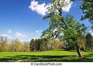 春天, 公園