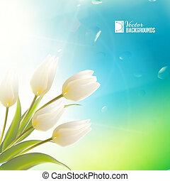 春天, 卡片, 由于, 白色, 鬱金香