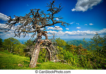 春天, 在, 風景, 藍色的脊林蔭道, appalachians, 冒煙的山
