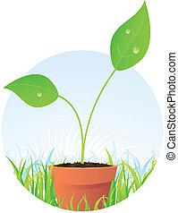 春天, 植物種子, 在, 罐