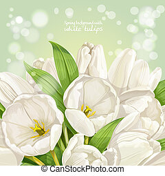 春天, 白色, 背景, 鬱金香