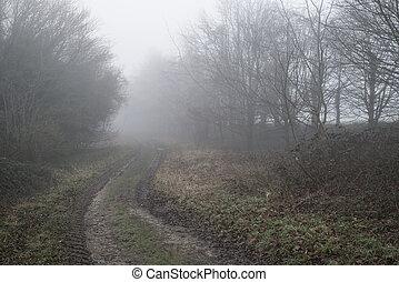 春天, 秋天, 戲劇性, 森林, 秋天, 有霧, 風景, 喜怒無常
