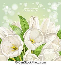 春天, 背景, 由于, 白色, 鬱金香