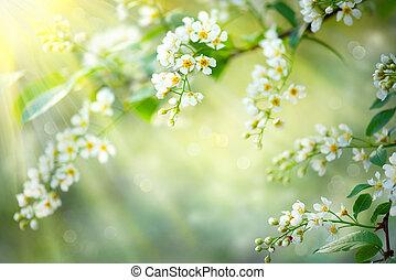 春天, 花, 自然, 背景。, 開花, 樹