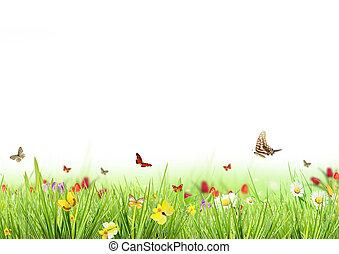 春天, 草地, 带, 白的背景