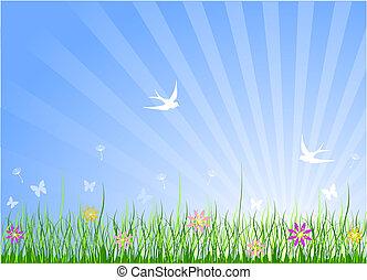 春天, 草地, 背景