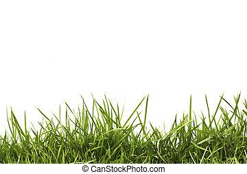 春天, 隔离, 背景。, 绿色, 新鲜, 白色, 草