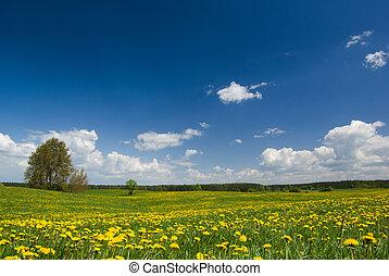 春天, 風景。