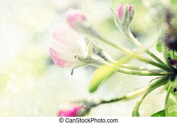 春天,  bokeh, 花, 背景