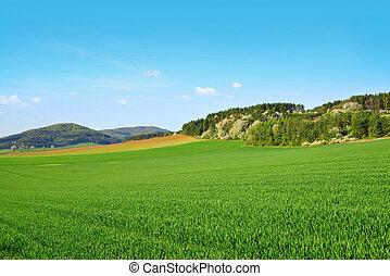 春天, field., 綠色的風景, 鄉村