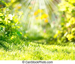 春天, sunbeams, 弄污背景, 性质