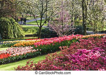 春, すばらしい, 4 月, 庭, 咲く