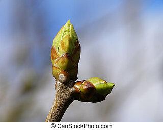 春, つぼみ