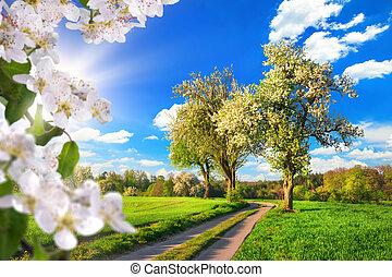 春, のどかな, 風景, 田園