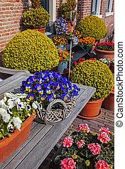 春, オランダ語