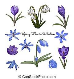 春, コレクション, デザイン, 花, 色, あなたの