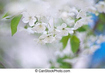 春, セット, 木, 花